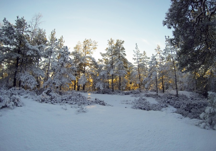 forest on snow