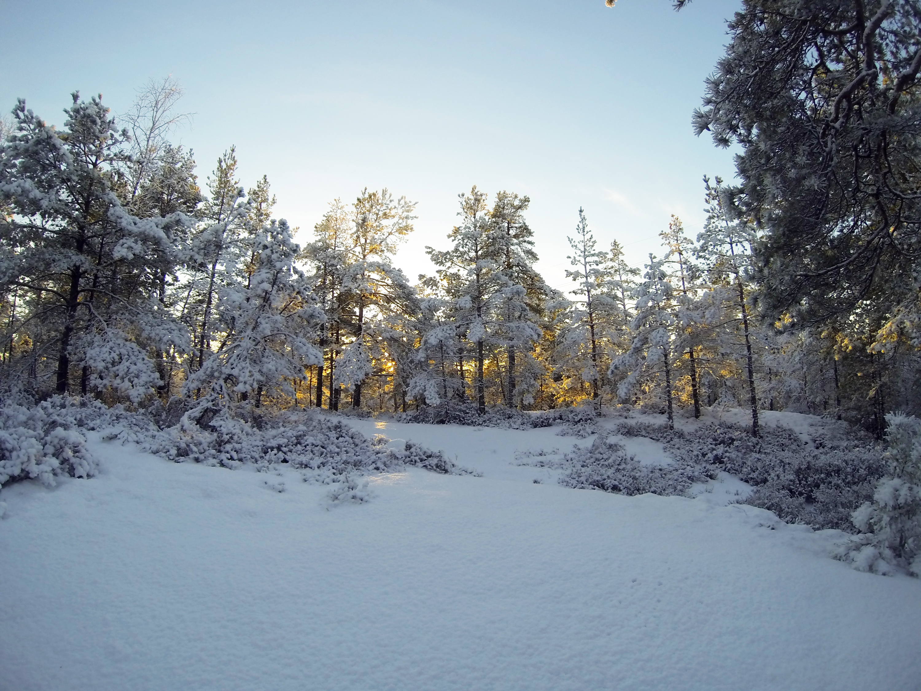 When Snow Has Covered The Forest | Study in Sweden: the ...