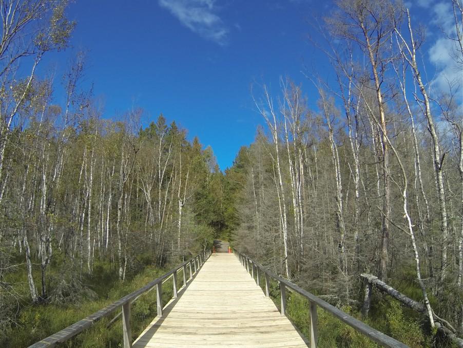 bridge in Tyresta