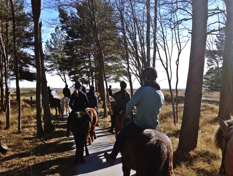 Horse riding through the forest in Fårö