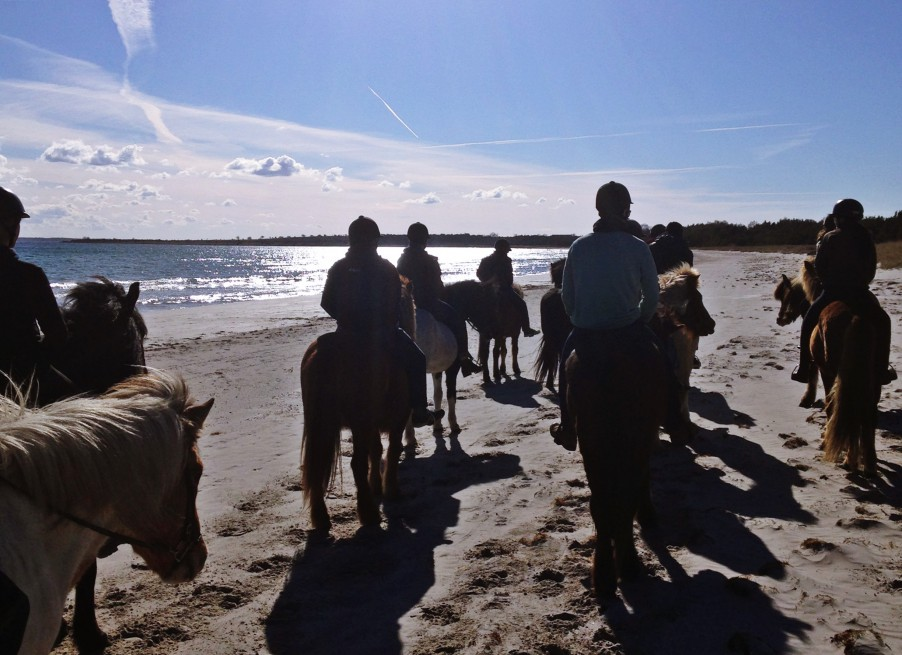 Horse riding in Fårö