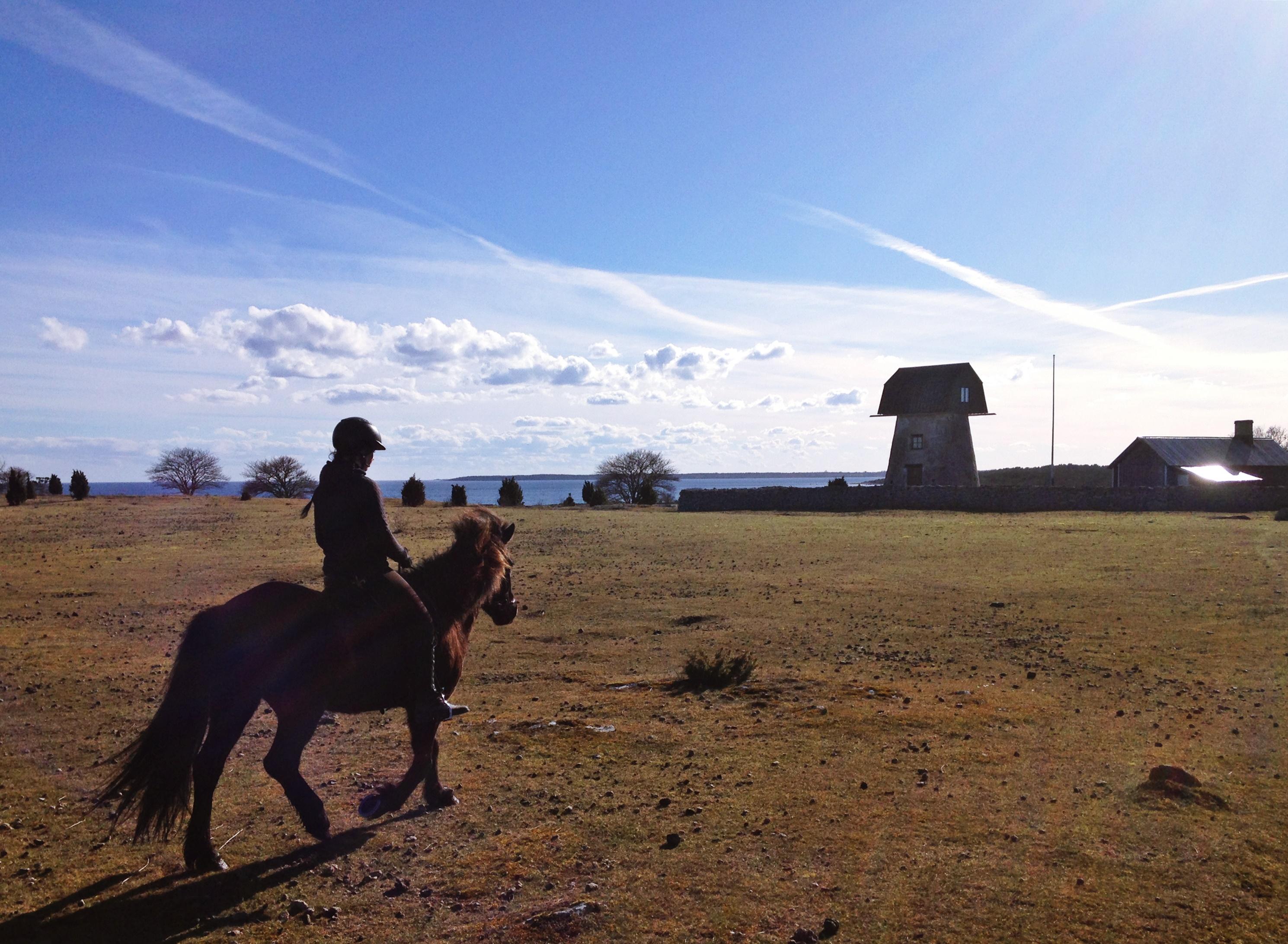 Horse riding in Fårö, Gotland
