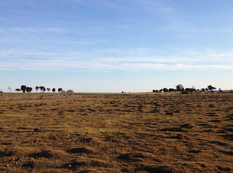 Fårö, Gotland landscape