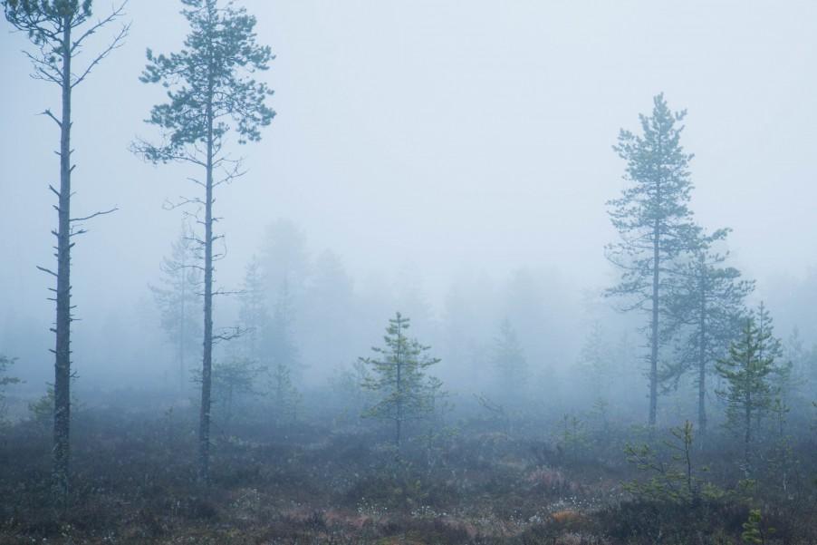 Fog_Umea-4