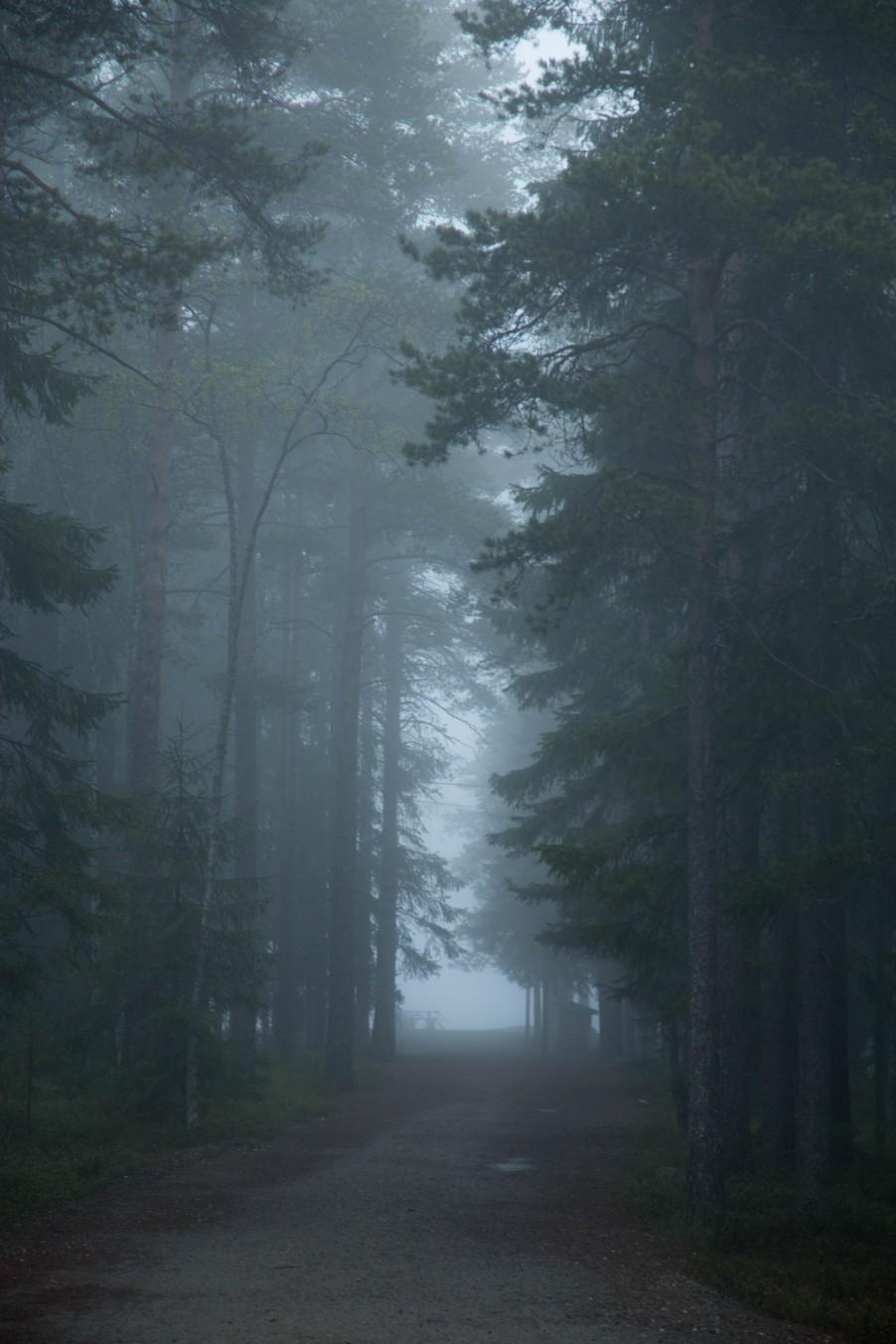 Fog_Umea-5