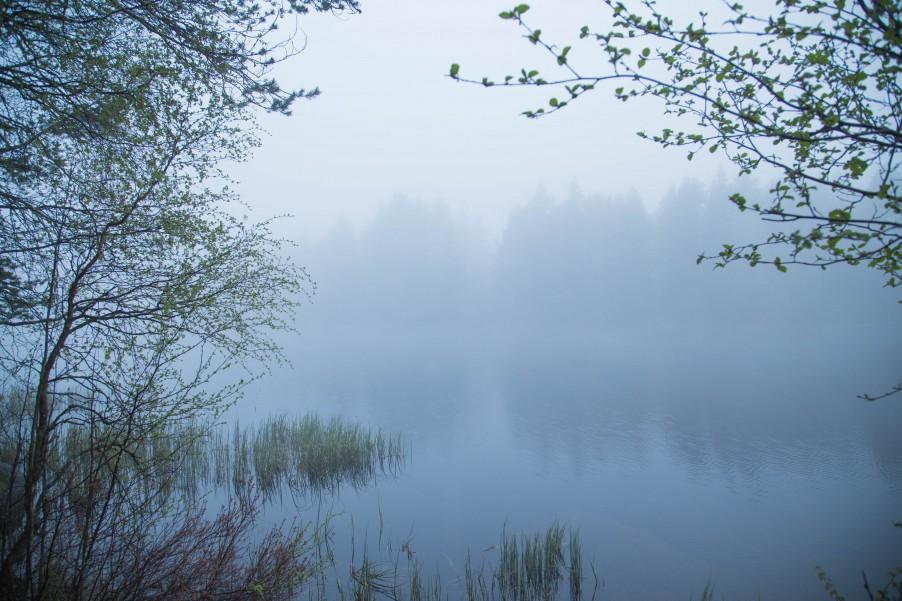 Fog_Umea-8
