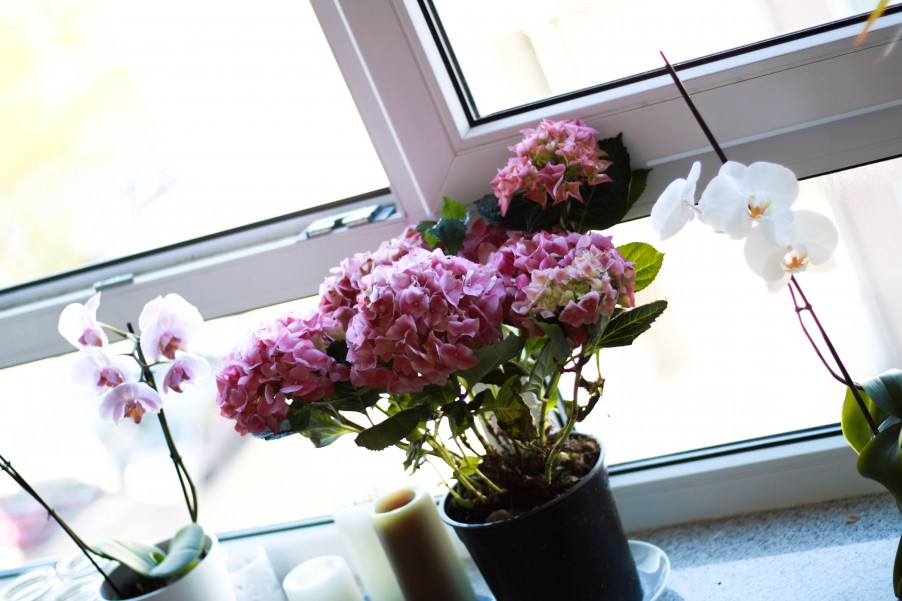 My flower-filled windowsill