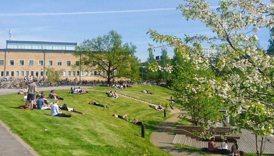 Umeå kopia