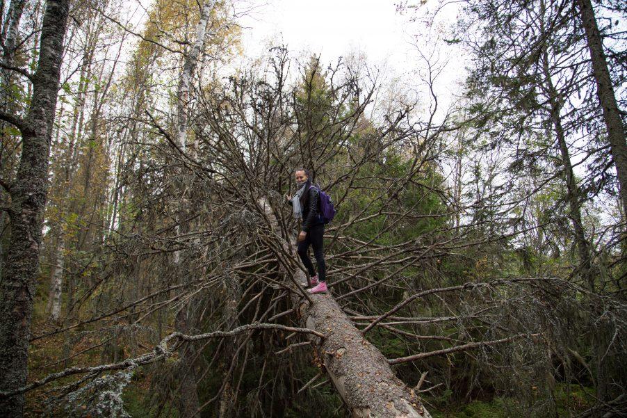 I like to climb ?