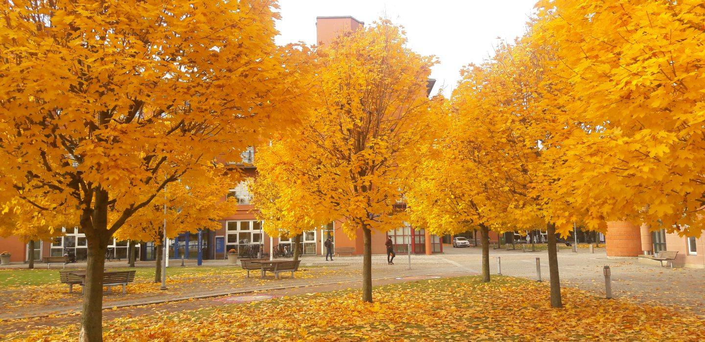 50 shades of Swedish Autumn