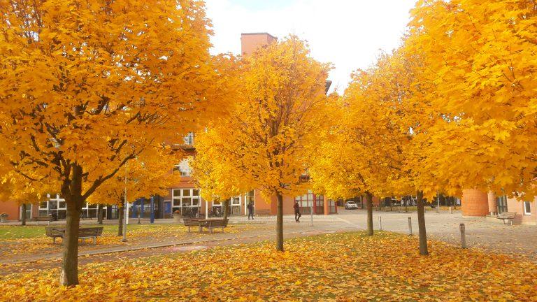50 shades of Swedish Autumn