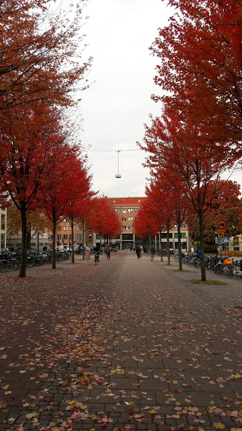 A love letter to Gothenburg