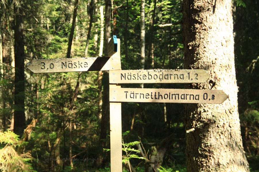 cross-road sign in Swedish forest