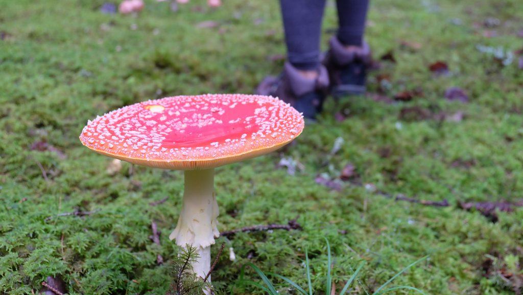 deathly mushroom