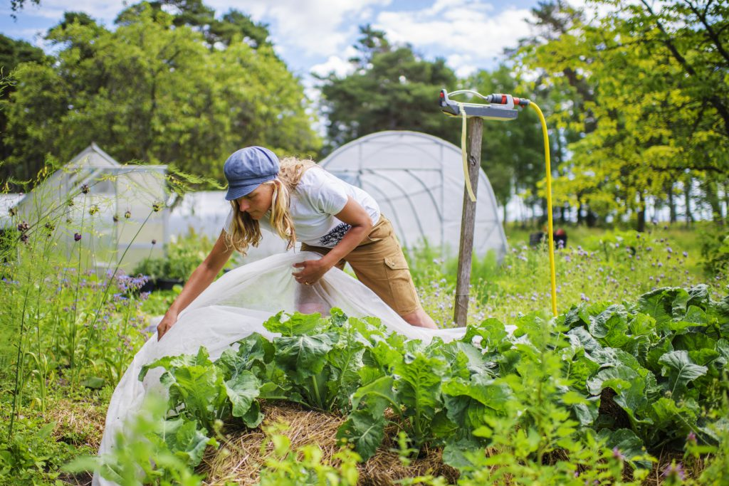 Organic farming outdoors.