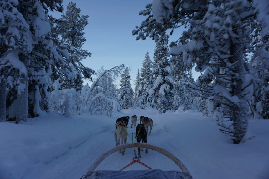 Dog sledding, Source: Inez