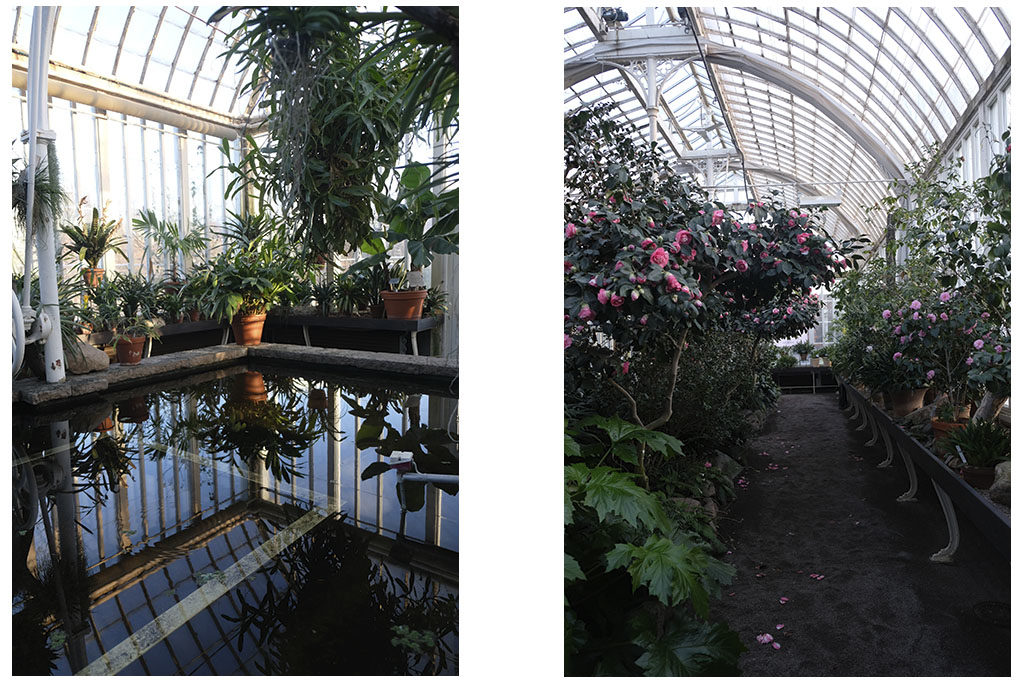 Plants in the water house and in the camelia room in Gothenburg's Palmhouse.