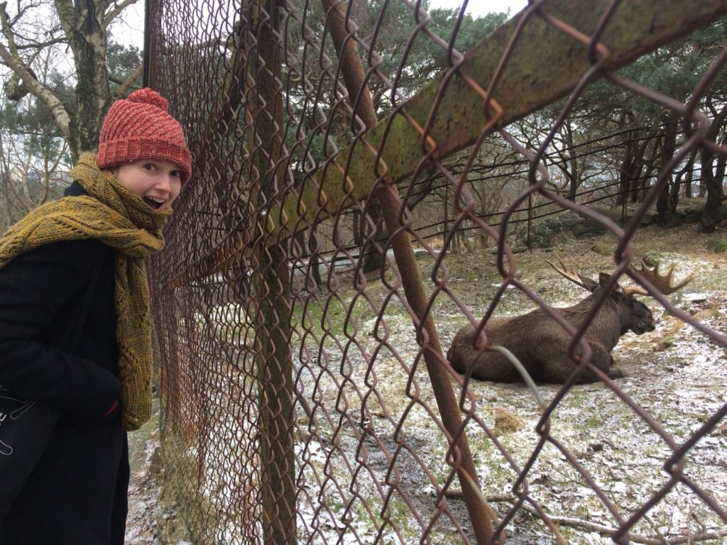 Photo of the author Lauren happy that she is visiting a moose in Slottskogen, Gothenburg!