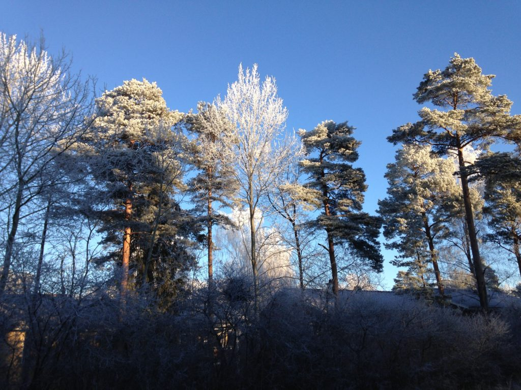 Flogsta trees in the winter