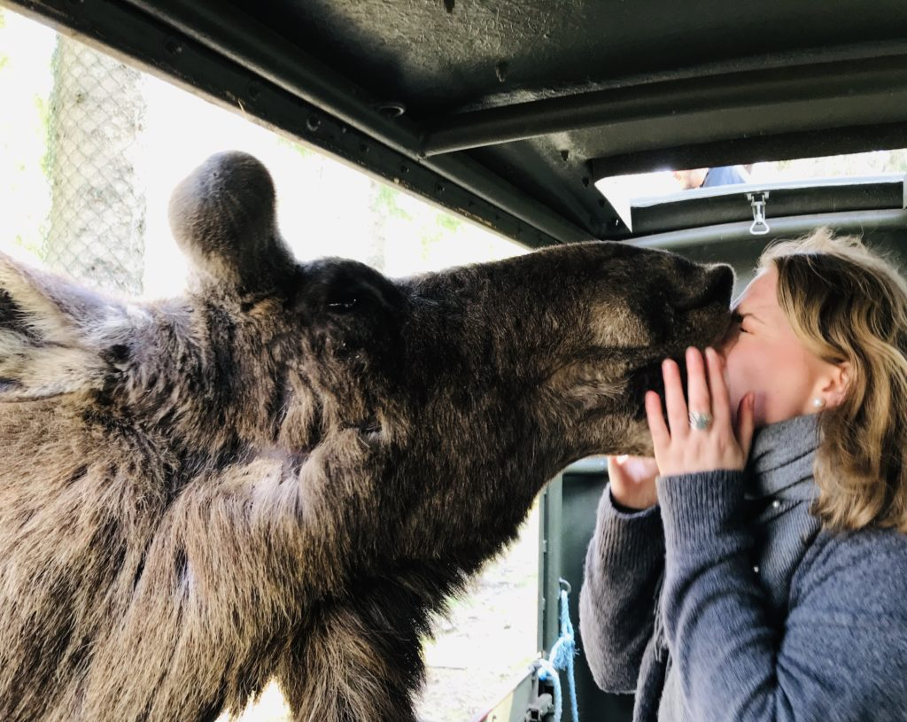 I accepted the fact that I won't have a cute picture of a moose kissing me/ Credit: Katharina