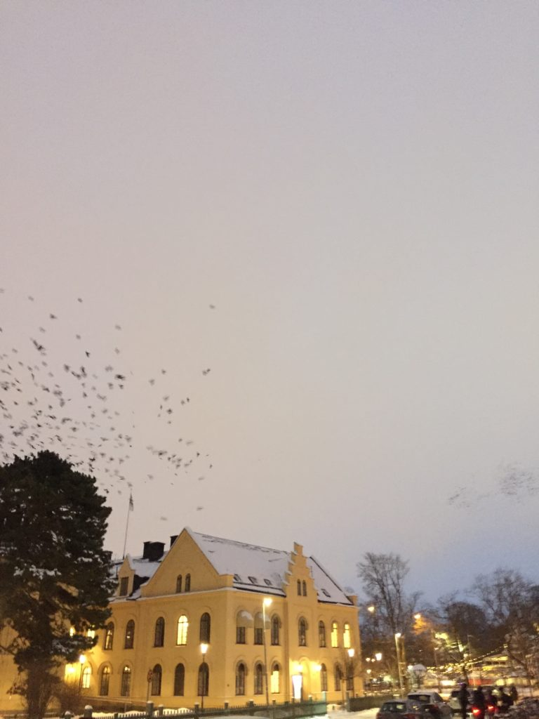 A grey winter in Uppsala, birds / Photo credits: Emma