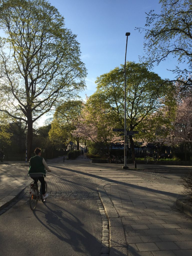 Cyclist and spring trees