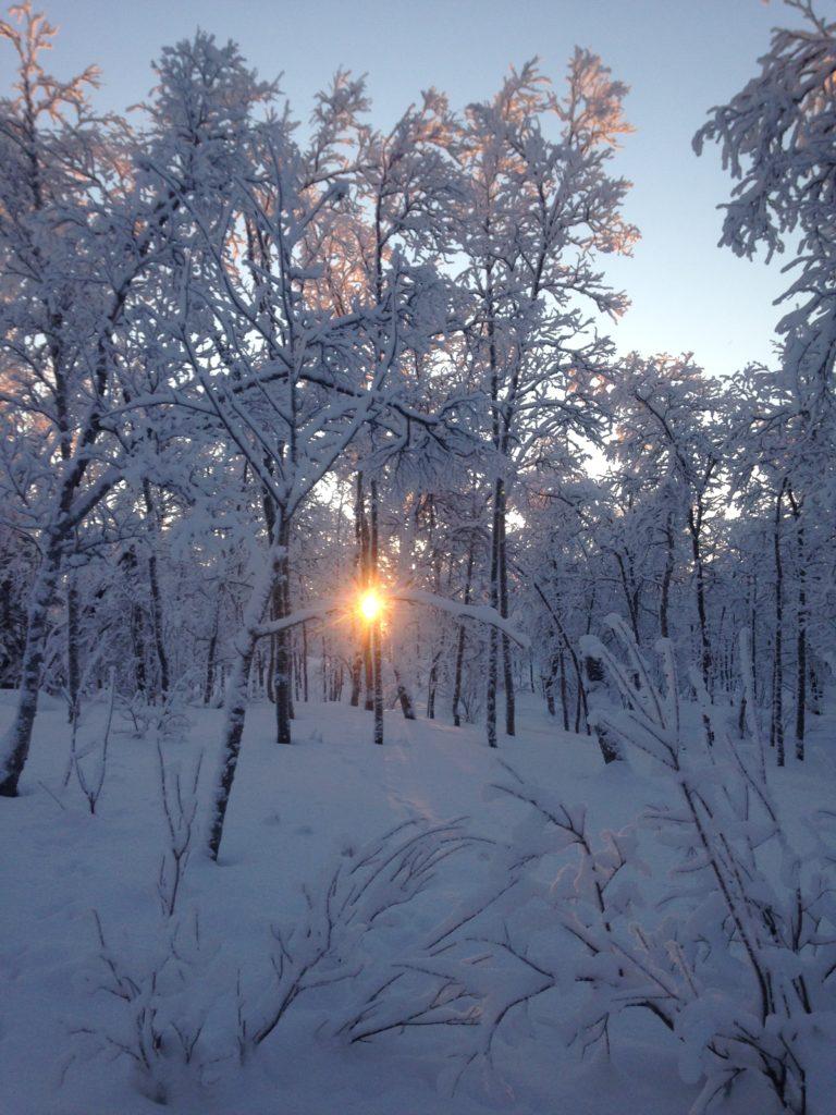 Frozen undergrowth, Kiruna 2018