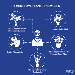 Illustration of indoor plants